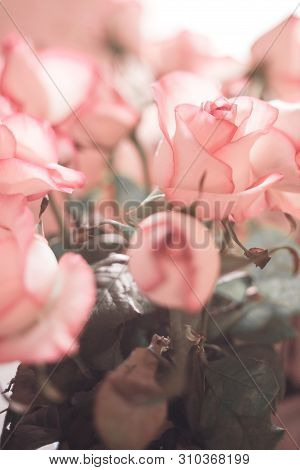 Summer Blossoming Delicate Roses, Blooming Flowers Festive Background, Pastel And Soft Floral Card,