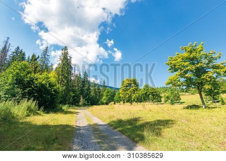 Abandoned Gravel Road Through Forest. Beautiful Summer Scenery On A Sunny Day. Cloud Above The Dista