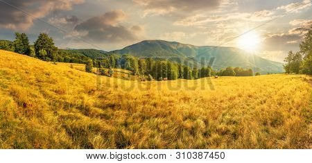 Late Summer Sunset Landscape In Mountains.  Beech Trees On The Grassy Meadow. Panorama With  Ridge I