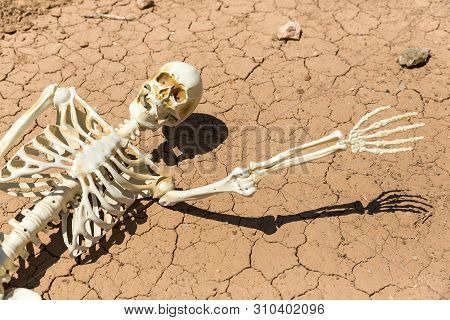 Skeleton Parched And Dead Of Thirst On Cracked Mud In The Desert