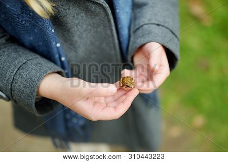 Adorable Little Girl Catching Little Babyfrogs On Beautiful Autumn Day In Forest