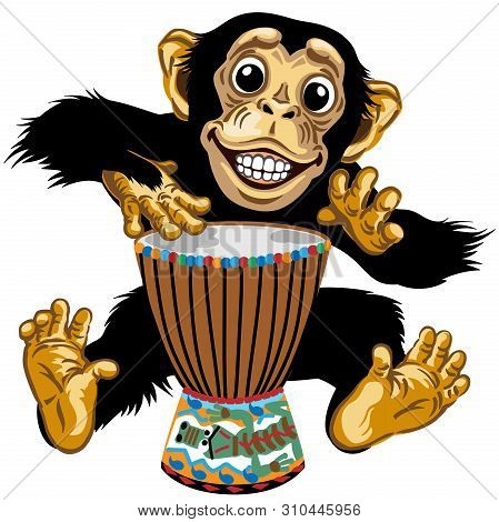 Cartoon Monkey Drummer. Happy Chimp Great Ape Or Chimpanzee Hands Playing On The African Ethnic Perc