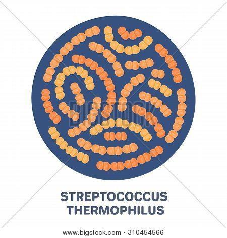 Vector Probiotics In Circular Shape. Streptococcus Thermophilus. Microbiome. Medicine Or Dietary Sup