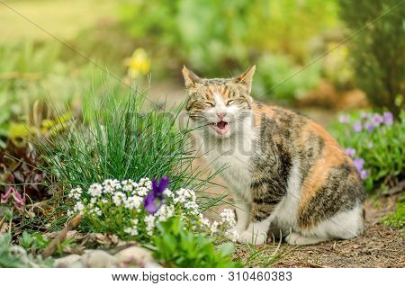 Curious Smile Cat. Cat In The Summer Garden