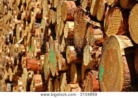 wood stack of fresh cut pine trees