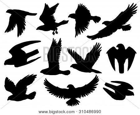 Eagle, Falcon And Hawk Black Silhouettes With Flying And Hunting Birds Of Prey. Heraldic Animals Wit