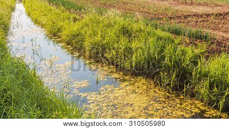 Curved Ditch With Duckweed In A Dutch Polder. The Ditch Is On The Edge Of A Field With Newly Sown On