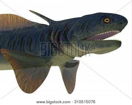 Orthacanthus Shark Head 3d Illustration - Orthacanthus Was A Carnivorous Freshwater Shark That Lived