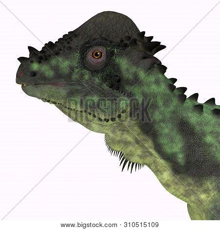 Pachycephalosaurus Dinosaur Head 3d Illustration - Pachycephalosaurus Was An Omnivorous Dinosaur Tha