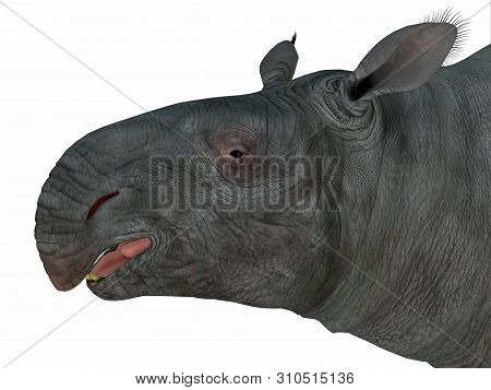 Paraceratherium Mammal Head 3d Illustration - Paraceratherium Was A Herbivorous Mammal That Lived In