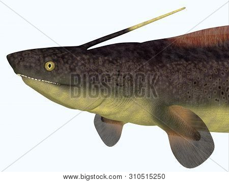 Xenacanthus Shark Head 3d Illustration - Xenacanthus Was A Carnivorous Marine Shark That Lived In De