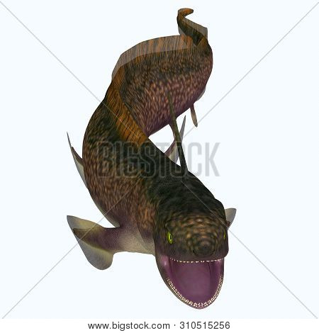 Xenacanthus Shark Open Mouth 3d Illustration - Xenacanthus Was A Carnivorous Marine Shark That Lived