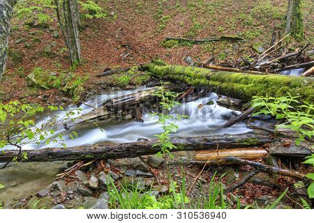 A Moss-covered Log Fell Through A Forest Stream In A Damp, Damp Forest.