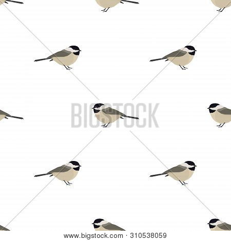 Vector Illustration Chickadee Birds Seamless Pattern Set