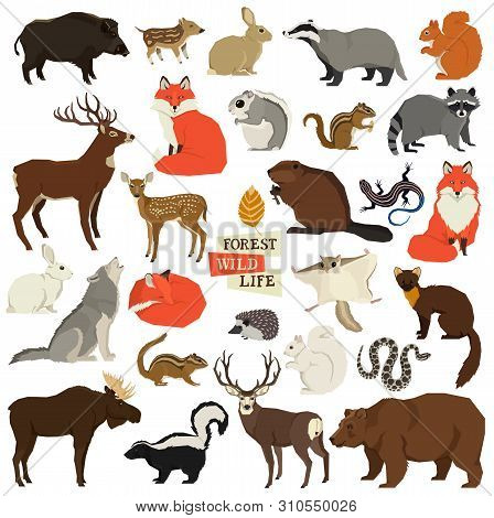 Vector Illustrations Of The Wild Animals Forest Wildlife Isolated Objects Geometric Style Set