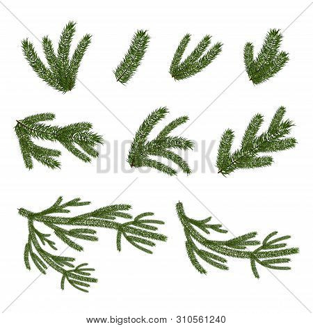 Vector Set Of Christmas Tree Brunches In Realistic Style
