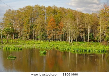 Reflection of the trees and vegetation of the subtropical Florida Everglades. poster