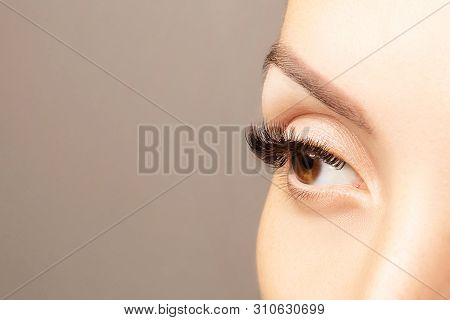 Brown Eye With Beautiful Long Lashes Closeup With Copy Space. Brown Color Eye Lash Extension, 3d Or