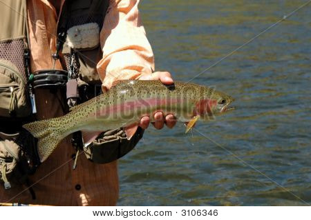 Rainbow Trout_Filtered