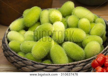 Cucumis Dipsaceus. Green Fruits Of Wild Cucumber With Villus Lengths In A Wicker Basket. Hedgehog Gr