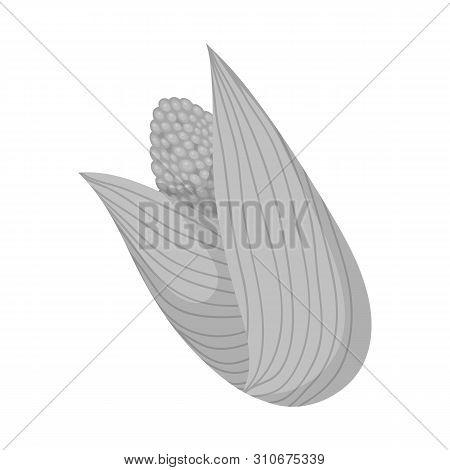 Vector Illustration Of Cob And Corn Logo. Collection Of Cob And Sweetcorn Vector Icon For Stock.