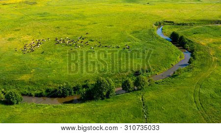 Aerial View From The Drone Of Summer Landscape With River, Hills And Forests. Cows Graze In The Mead