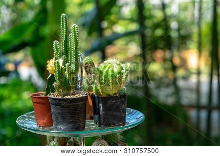 Multiple Combined Cactus Decor Together On The Dessert Dish On The Fruit Line Buffet At The Garden I