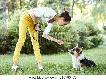 Welsh Corgi Dog Being Punished For Bad Behavior By Owner With Finger Pointing At Him.