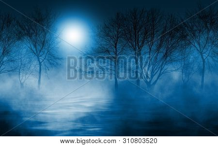 Empty Dark Background. The Glow Of The Moon In The Forest, Moonlight Through The Trees In The Forest