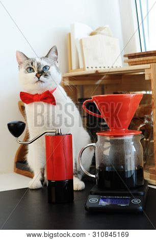 Cute white blue-eyed cat barista in bow tie brewing pourover coffee. Red v60 dripper and handgrinder poster