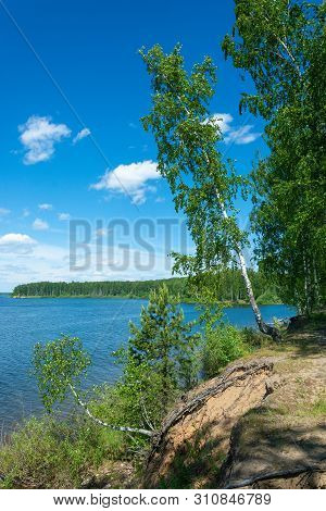 Steep Bank Of The Uvod River With A Tilted Birch On A Summer Day, Ivanovo Region, Russia.
