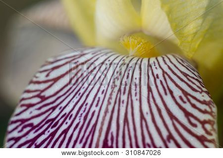 Macro Close-up Of A Bright Beautiful Flower.