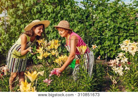 Senior Woman And Her Daughter Gathering And Admiting Flowers In Garden. Gardeners Cutting Lilies Off