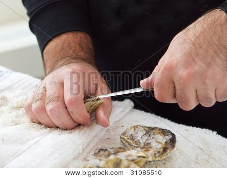 Shucking An Oyster