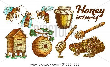 Collection Honey Beekeeping Apiary Set Vector. Glass Bottle And Slice Honeycomb, Wooden Hive And Wil