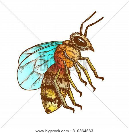 Striped Bee Flying Insect Animal Side View Vector. Bee Swarm Is Large Group Of Pollinators In Ecosys