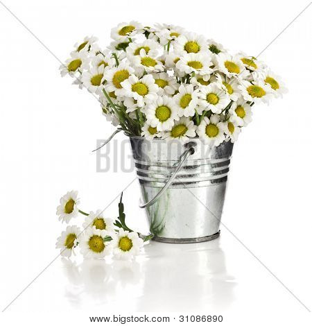 bouquet of daisy flowers in a bucket in white background