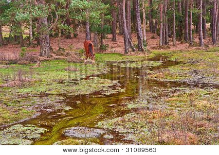 Flooded forest landscape with wild New Forest pony at edge of trees poster