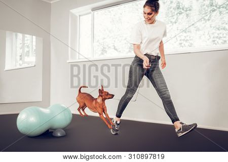 Loving Caring Woman Training Her Cute Little Brown Dog