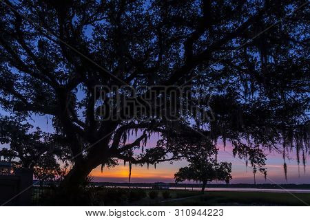A Large Oak Tree With Spanish Moss Hanging From It Spreading Branches Is Silhouetted By A Dramatic S