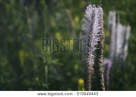 Plantain. Natural background. Plantago. Green background. Nature style. Copy space. poster