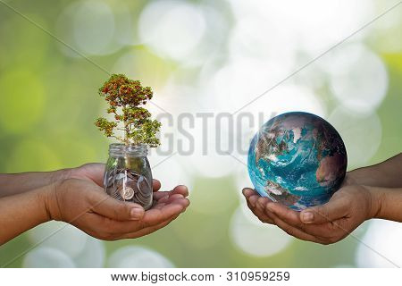 World Environment Day, Nature Environmental Protection Concept With Two Human Hands Balancing Tree P