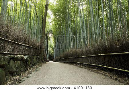 Famous Bamboo Grove At Arashiyama, Kyoto - Japan
