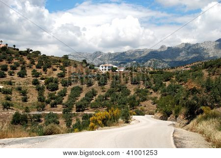 Olive groves, Axarquia region, Andalusia, Spain.