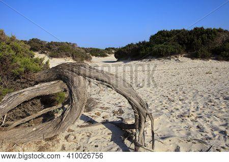 Es Trenc, Majorca / Spain - August 25, 2016: A Trunk In Es Trenc Beach, Colonia De Sant Jordi, Mallo
