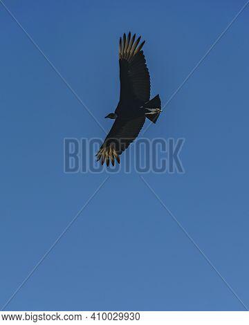 Black Bird Flying At Blue Sky