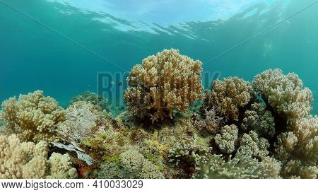 Coral Reef Underwater With Fishes And Marine Life. Coral Reef And Tropical Fish.