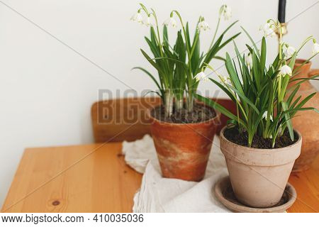Spring Flowers Growing In Clay Pot On Rustic Wooden Table With Linen Fabric In Room. Rural Still Lif