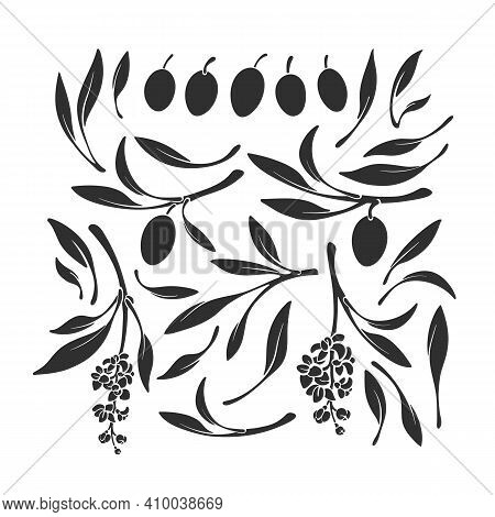 Kalamata Olives Set Silhouettes. Vector Black Shape Of Branch, Isolated Leaves, Fruits, Flower On Wh