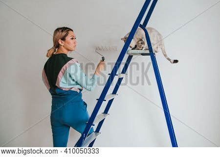 A Girl Of Asian Appearance Makes Repairs In The House With A British Cat. Young Woman Paints The Wal